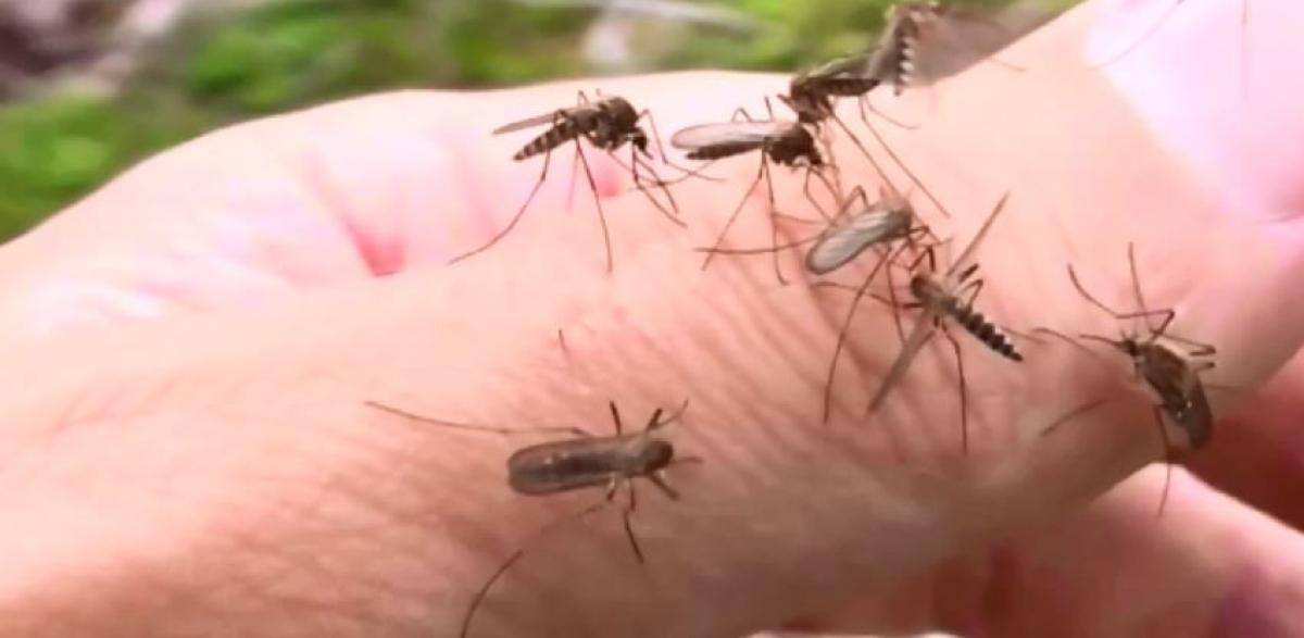 Több mint ötszáz településen gyérítik a szúnyogokat a héten