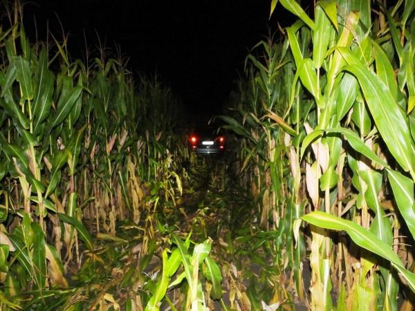 A kukoricásig jutott a balfék tolvaj - FOTÓ