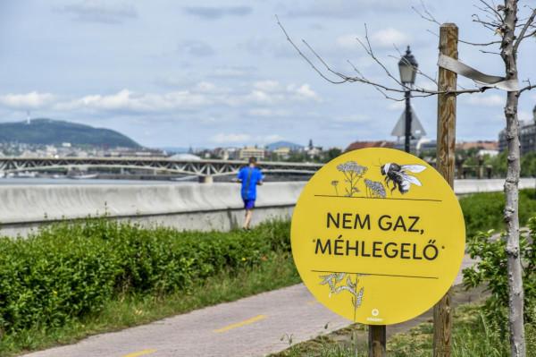 Budapesti méhlegelők: 28 hektárral kevesebb területet kaszál a Főváros, jóval drágábban