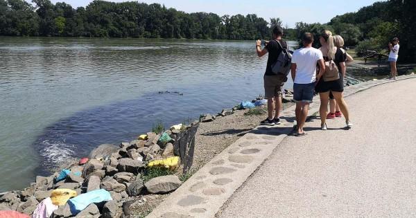 Baloldali szakértelem Szentendrén: egy hete ömlik a szar a Dunába